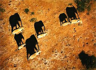 Вид слонов с воздуха