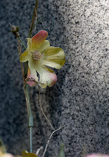 "Linen Flower on ""Maiden's"" Grave"