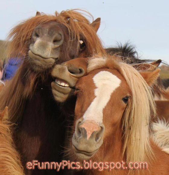 Lovely and Funny Horses