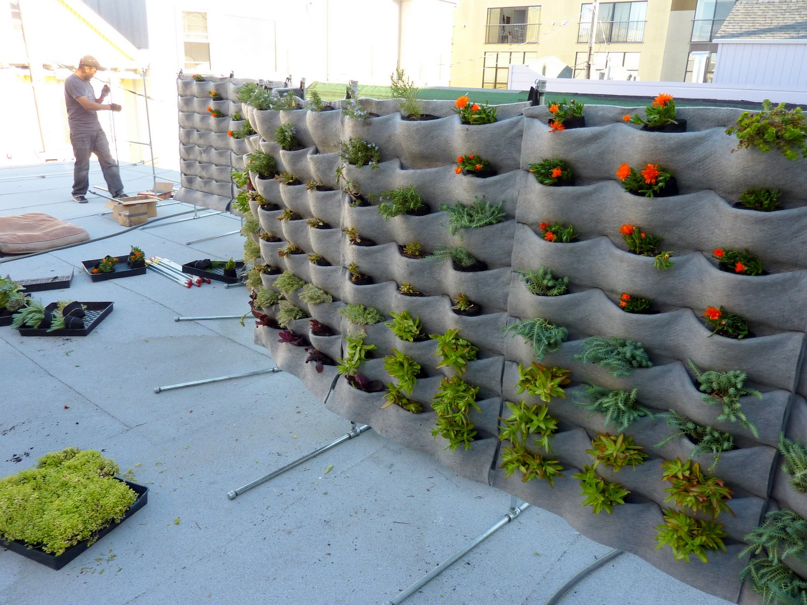 Plants on walls vertical garden systems march 2012 for Vertical garden wall systems