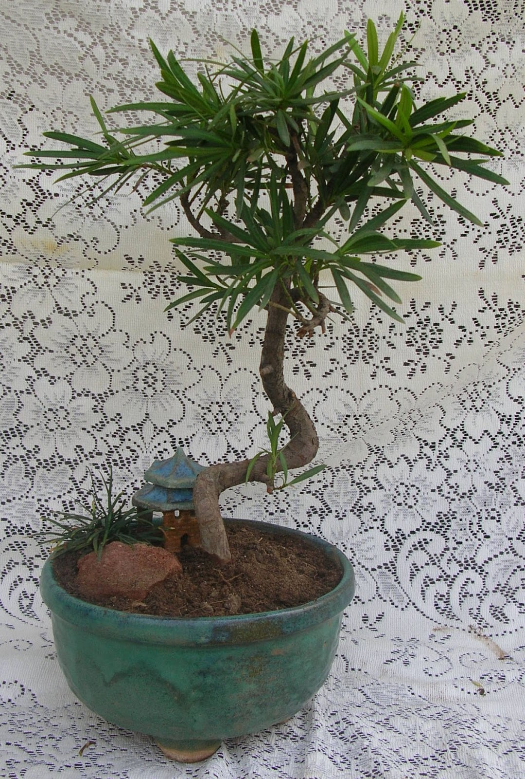 Bonsai Plants And Tree Green Ahmedabad