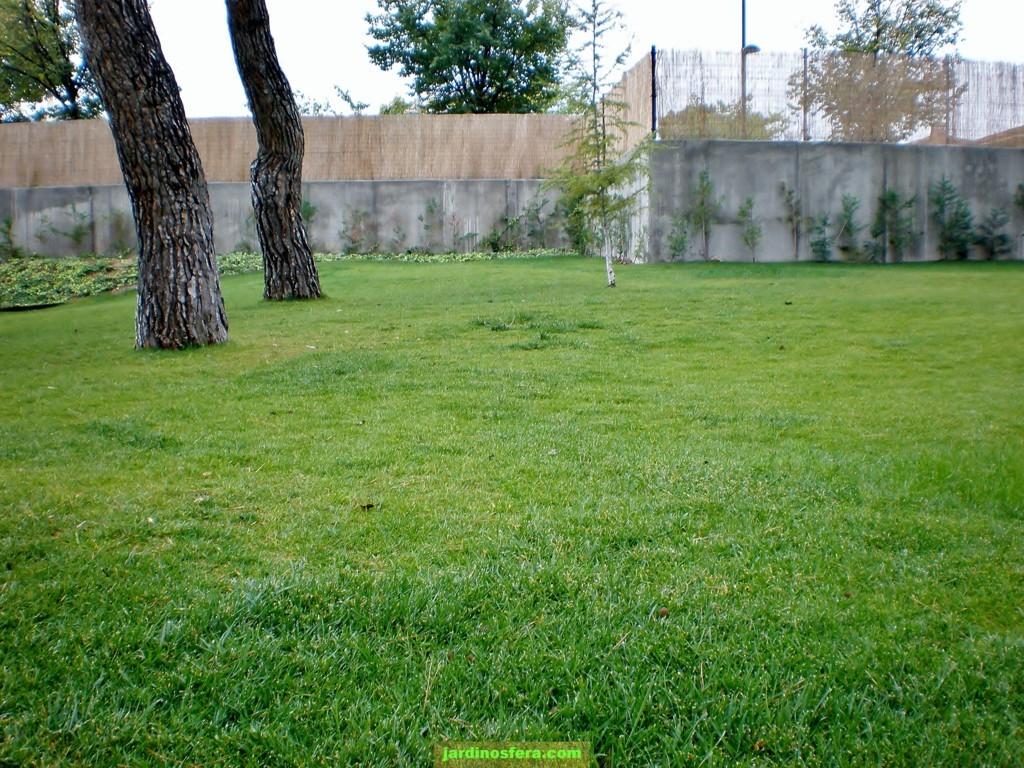 Mejor poca para sembrar un c sped jardinosfera for Como plantar cesped natural