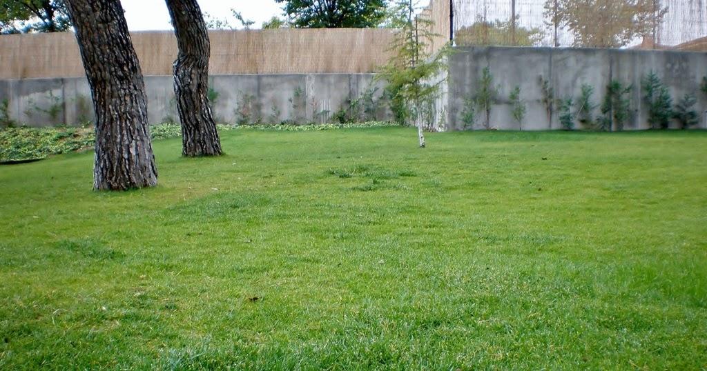 Mejor poca para sembrar un c sped jardinosfera - Cuando plantar cesped ...