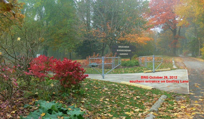 Burning bush and maples add dash of red to garden entrance of BRG at Godfreys Lane in Port Credit.