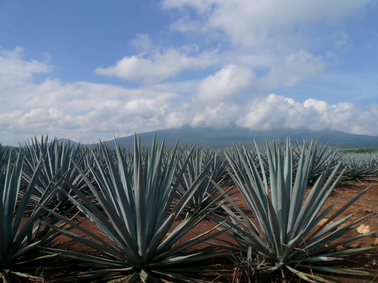 15 Mesmerizing GIFs Show Exactly How Tequila Is Made