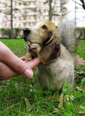 ابداعات الفوتوشوب على الحيوانات-خداع بصري-منتهى