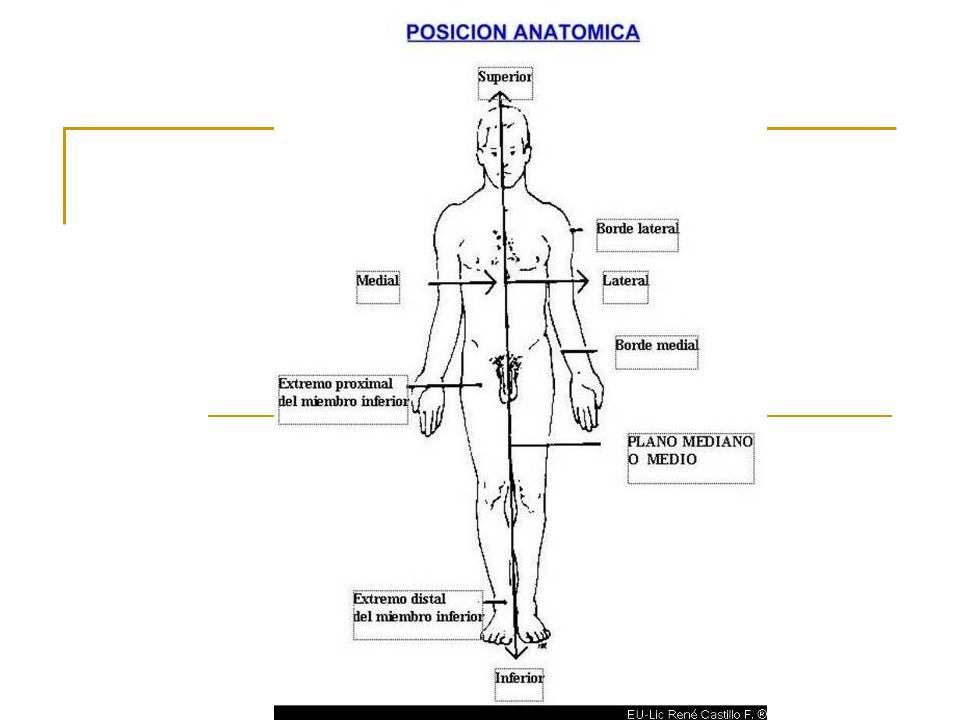 Anatomia y mas: introduccion a la anatomia (colaboracion externa)