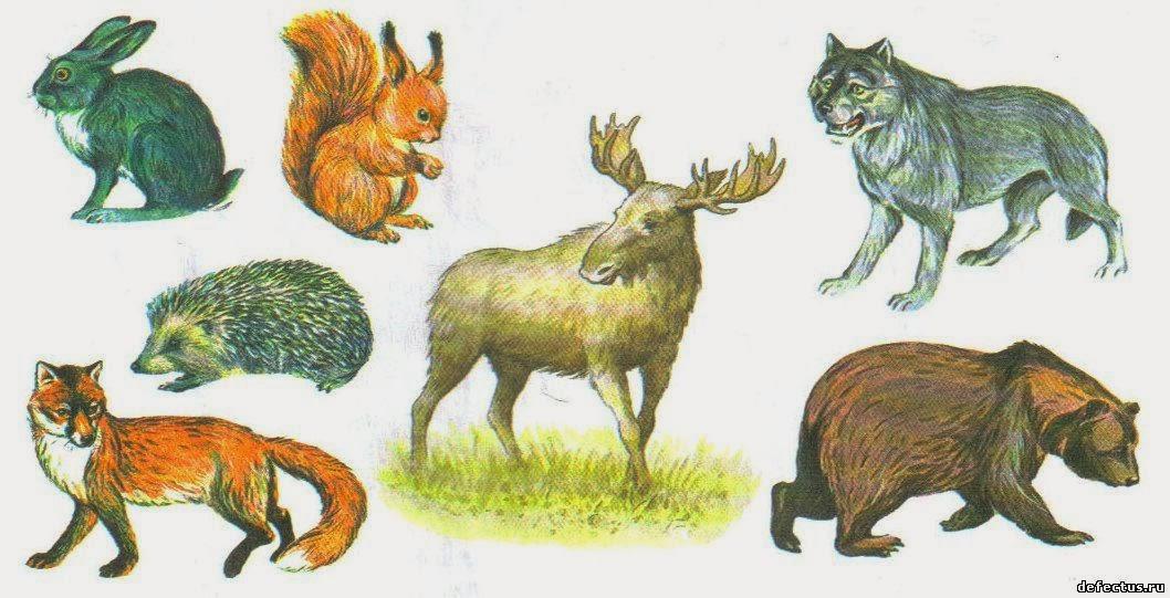 Лексическая тема дикие животные 25 11 29