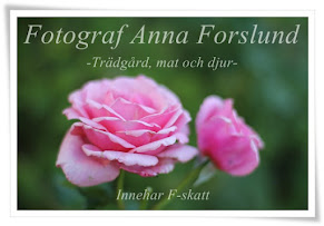 Fotograf Anna Forslund