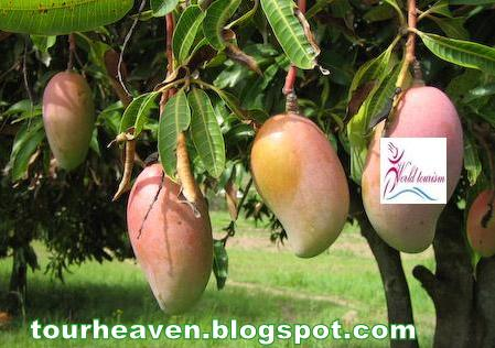 tropical fruits pictures philippines tourist