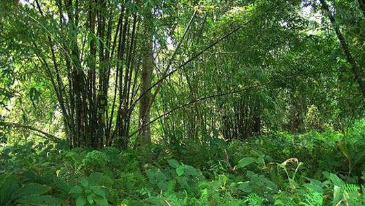 This Indian Man Planted an Entire Forest by Hand - Molai Woods