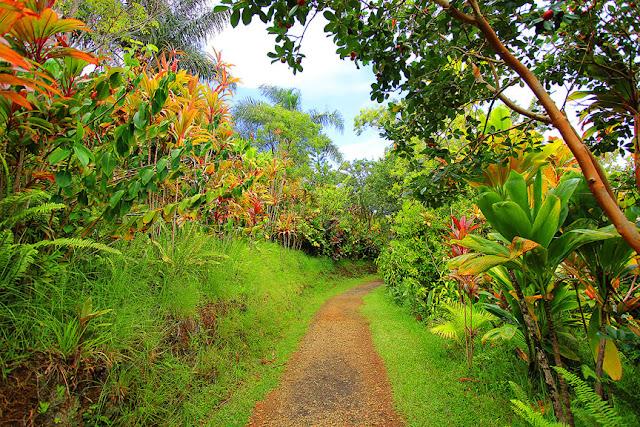 Maui Island