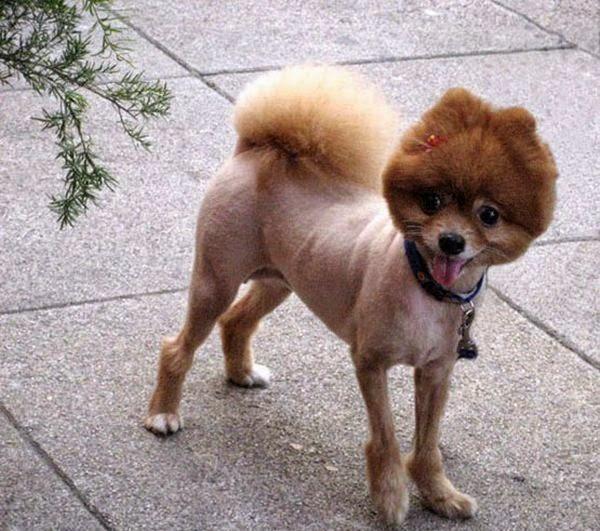 Corte De Pelo Para Perros - Cortar el pelo a mi perro Paso a paso ExpertoAnimal