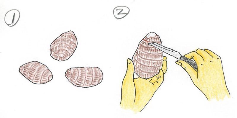 1.種薯 2.削皮