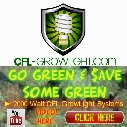 Unbelievable Growth with 4000 Watts of CFL!