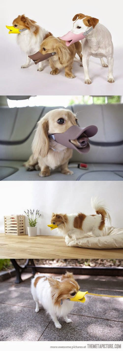 duck bills on dogs, dog duck faces, cone of shame alternative, all smiles dog