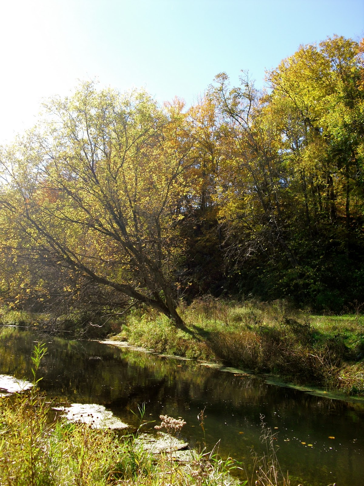 The rogue outdoors driftless for Fly fishing iowa