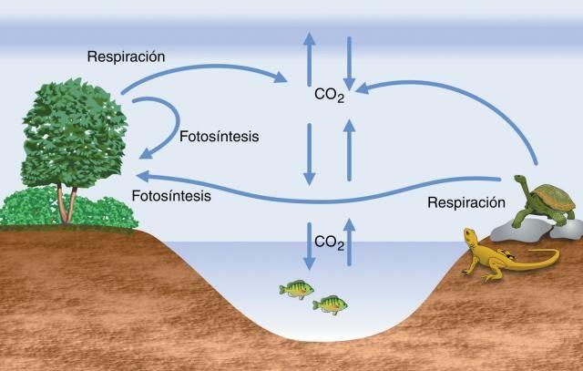 CICLOS BIOGEOQUÍMICOS | Químicas-Biológicas