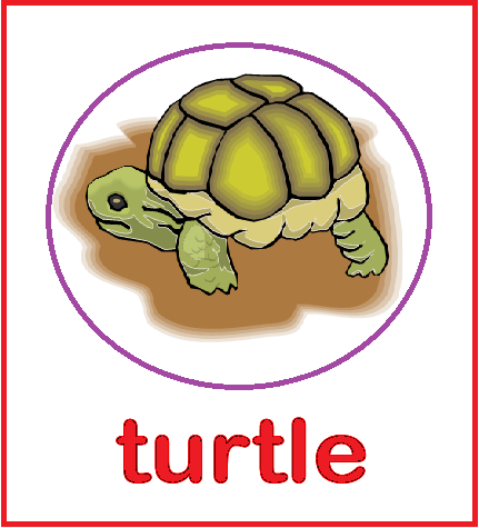 Kindergarten Worksheets: Animal Flashcards - Turtle