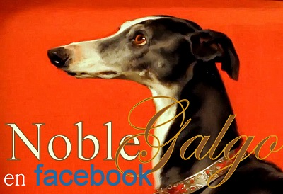 Noble Galgo en facebook