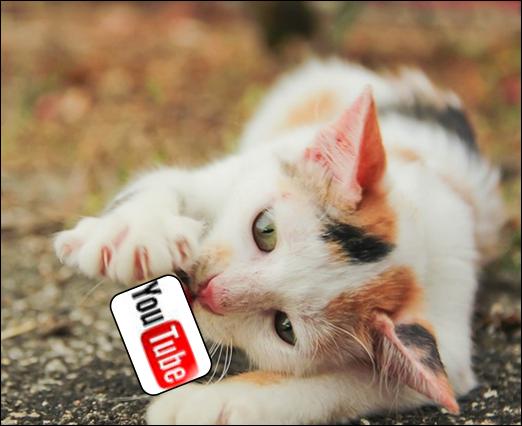 Gato Youtube