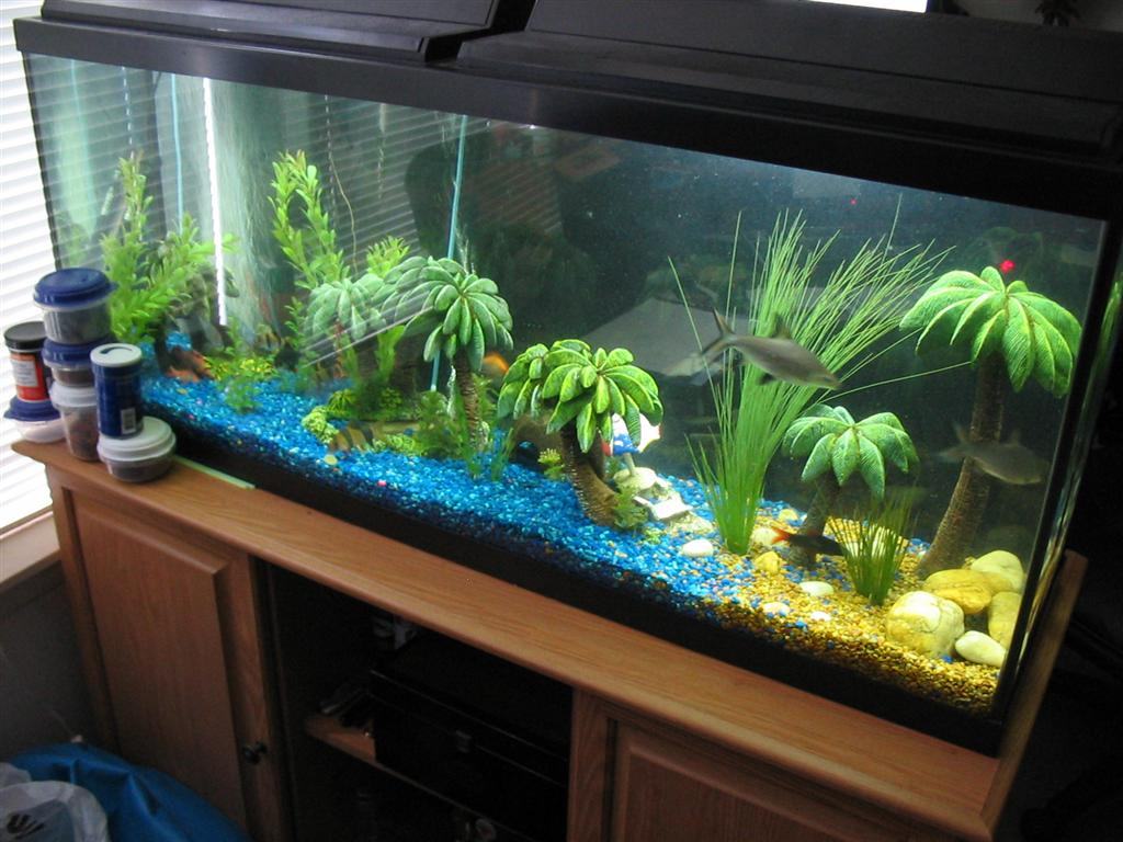 Florida disneyland pictures of fish tanks decorated for Aquarium decoration diy