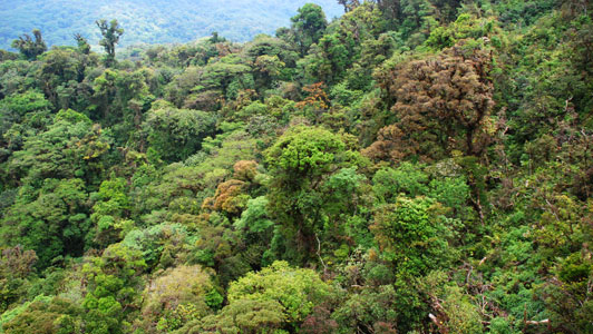 the importance of forests Forests, an international, peer-reviewed open access journal.