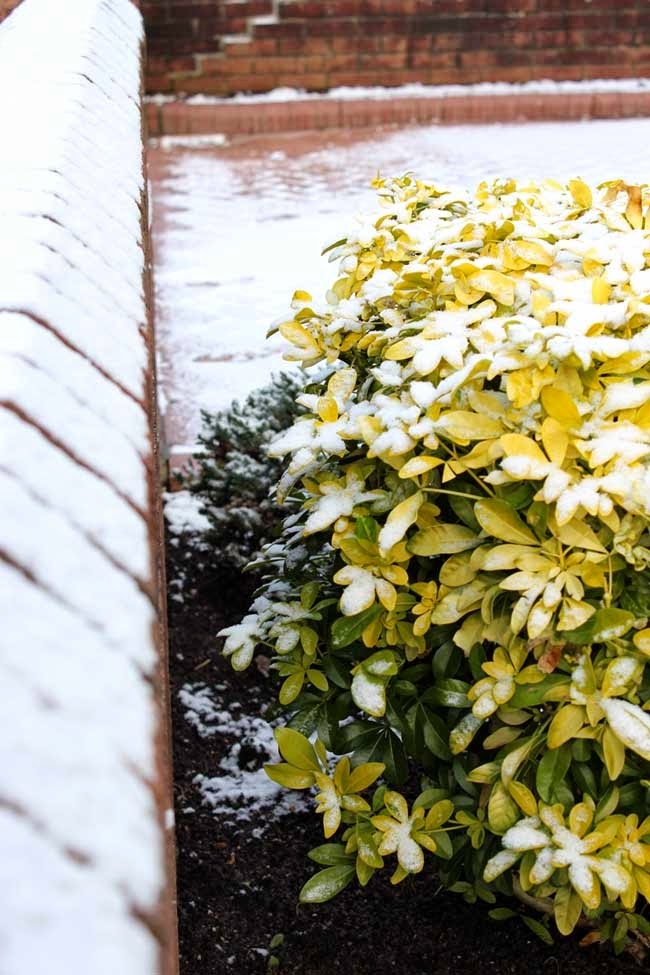 plants in the snow, white snow, winter, todaymyway.com