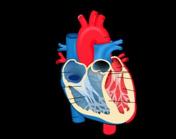 History of heart transplant grade 7 science think tank centre history of heart transplant grade 7 science ccuart Choice Image