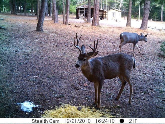 Big Bucks are Back!