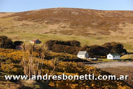 Isla Carcass - Carcass Island - Islas Malvinas - Falkland Islands - Andrés Bonetti