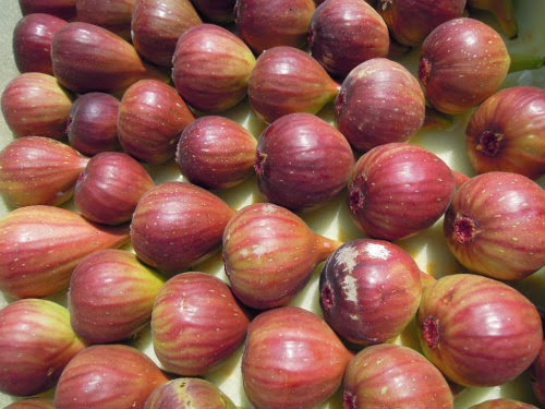 the figs to sail the sea