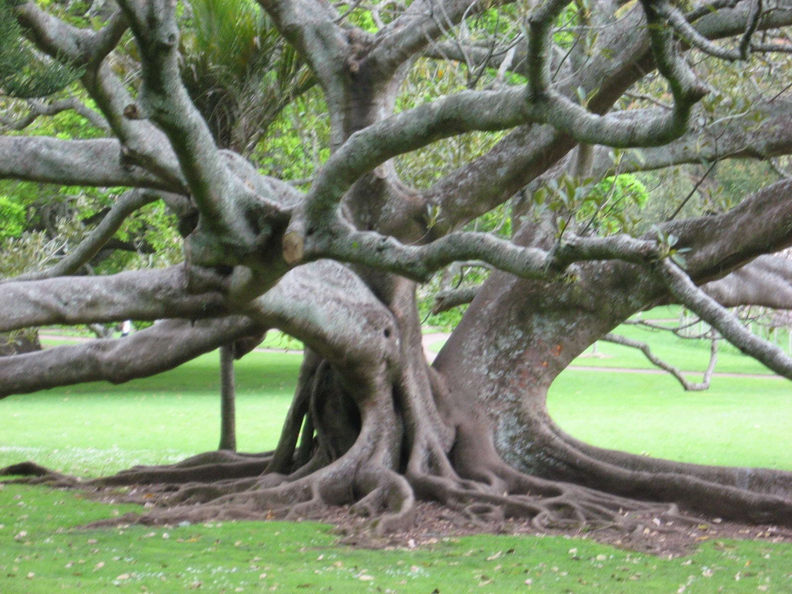 Under The Sycamore Tree Falling In Love With A Tree
