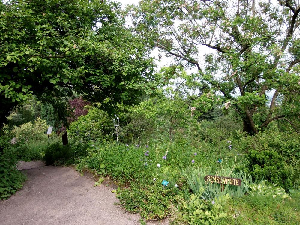 Les photos de floralie jardin botanique de saverne - Jardin botanique de saverne ...