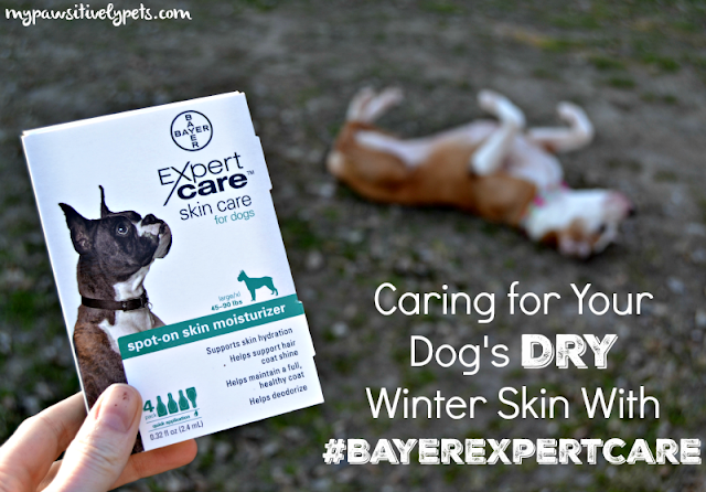 Caring for your dog's dry winter skin with #BayerExpertCare