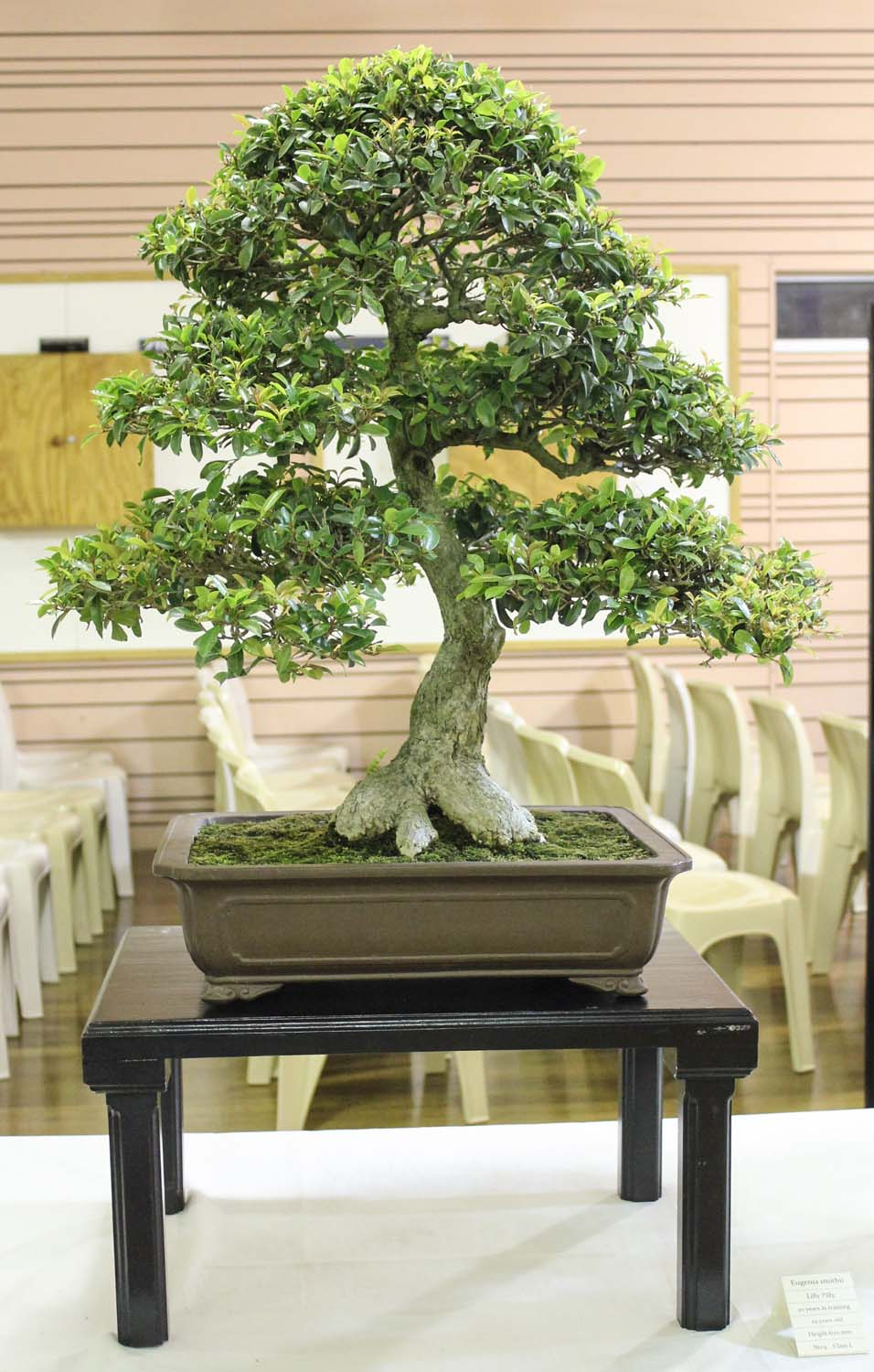 Redlands Bonsai Society 2015 Annual Bonsai Show More Pictures