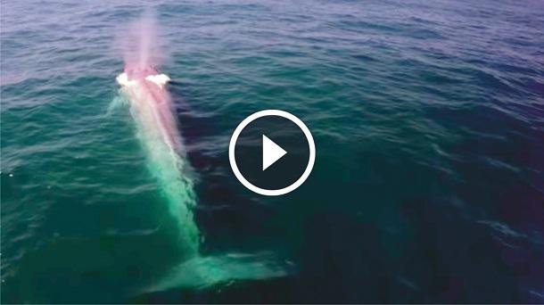 Fotos y videos de la ballena azul 69