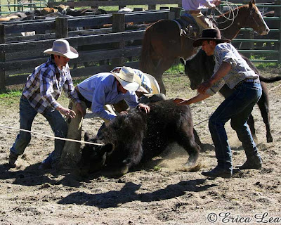 cowboys, roping, calf