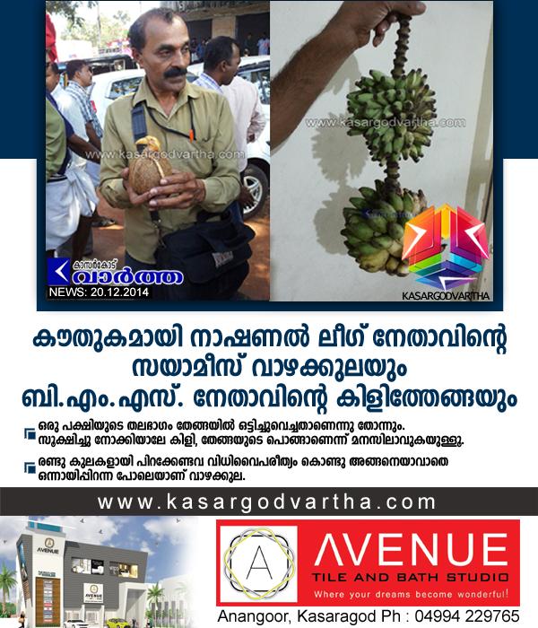 Kasaragod, Kerala, Coconut, Birds, House, Town, Vice president, Banana.