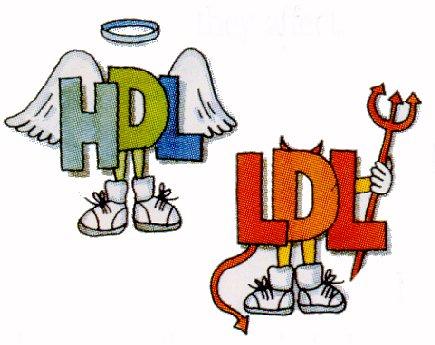 Imagen obtenida de: http://xyerectus.blogspot.com/2011/04/el-colesterol-bueno-hdl-no-solo-mejora.html