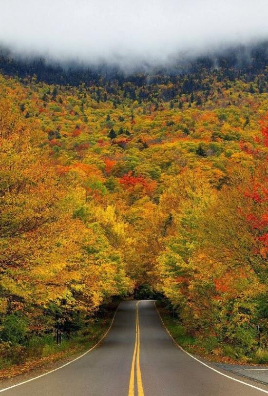 Туннель осенних деревьев в «Ущелье контрабандистов». Вермонтский парк, США