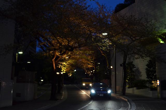 Trees lit up, Akasaka, Tokyo(木はライトアップ東京赤坂)