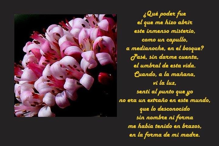 Gracias Madre Poemas frases, mensajes y poemas del dÍa de las madres | somos asi