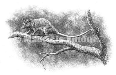 marsupial de Europa extinto Peradectes