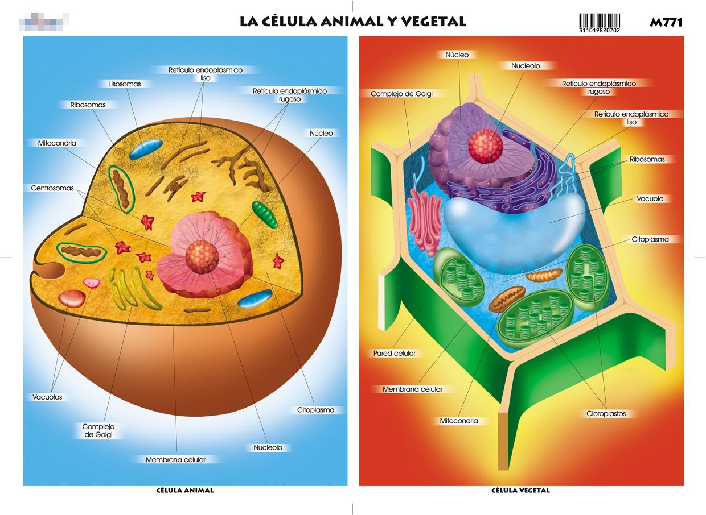 J ssica leticia 1 e c lula vegetal e animal - Estructuras libros vivos ...