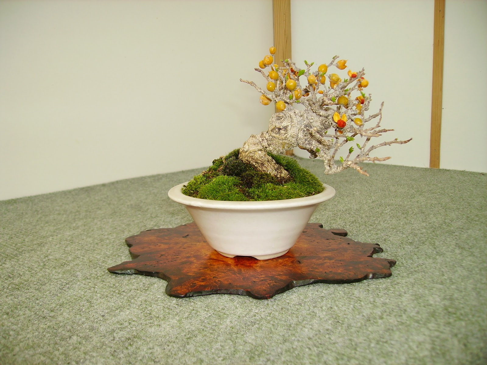 Bespoke Bonsai Stands My Trees Displayed At QuotShohin Offquot The BSA
