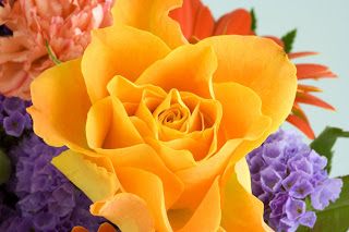 colorful roses - powerful web visuals