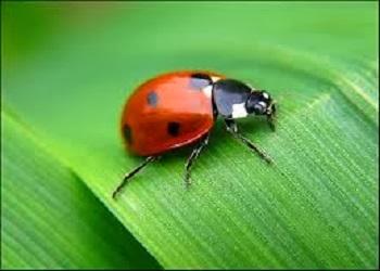 الحشرات تموت من الخوف ... هل تعلم ذلك  - البق - الخنفساء - الخنافس - beetle insect bug