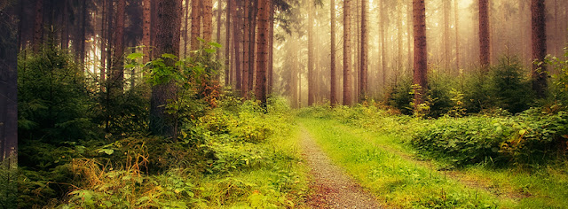 Peaceful Atmosphere In Beautiful Forest