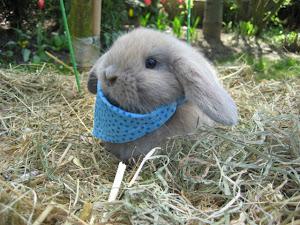 Rund ums Kaninchen